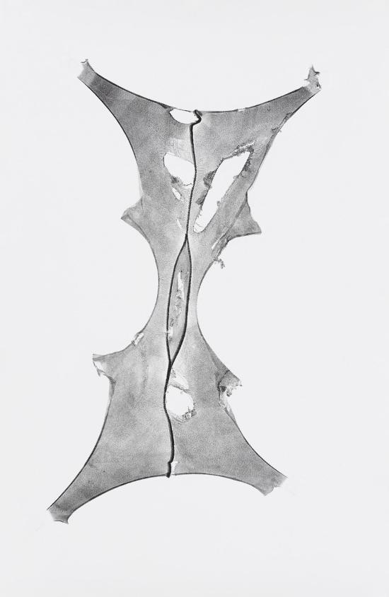 Julia Phillips (b. 1985), Expanded V, 2016.
