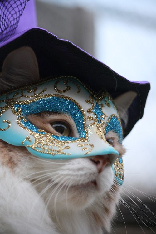 New Orleans cats are always ready for Mardi Gras! #OnlyLouisiana #neworleans