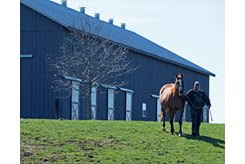 A mare is led to her paddock on a Thoroughbred farm in Kentucky