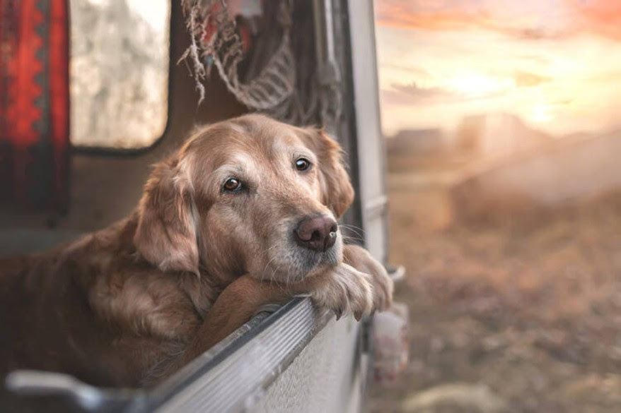 The winners of the International Pet Photographer Awards are out and I am in awe