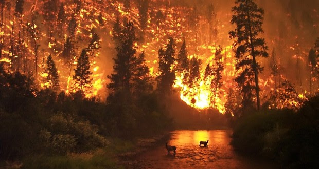 wildfire is good for forests