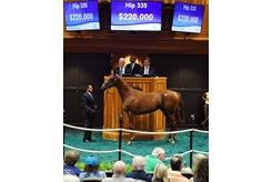 The son of Nyquist consigned as Hip 335 in the ring at Fasig-Tipton