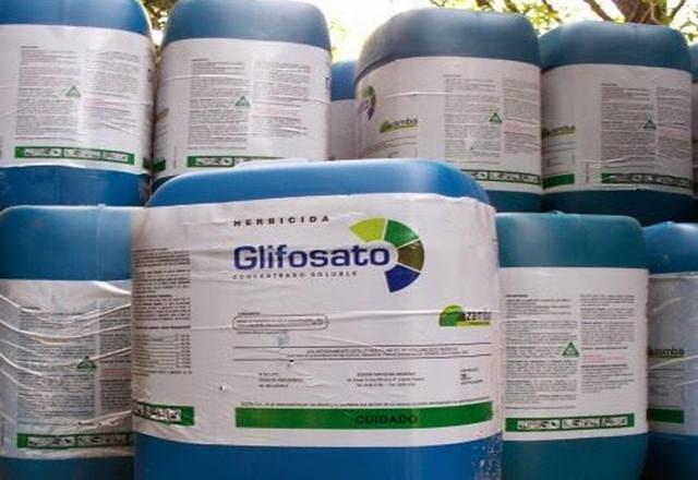 O decreto elaborado pela ministra de Saúde da Itália estabeleceu que seja retiradas as autorizações de comercialização de mais de 85 produtos fitossanitários que contêm glifosato como substância ativa - Créditos: Reprodução