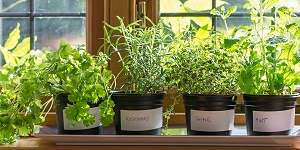 Indoor Survival Gardening
