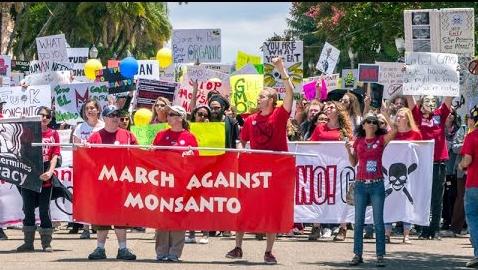 March Against Monsanto 5ee518dc18b4275050972c4dc719db37735eb30a3140d86c1fb8b5448ff2c49ad64b98dcd9bf8663697c41b2acc1f55a825a372de3cc7dd61ac6d7b0390fabaa