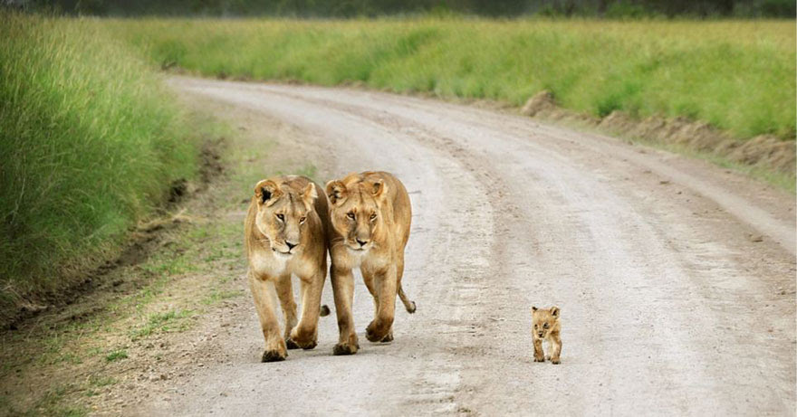 http://www.boredpanda.com/cute-animal-parenting/?image_id=animal-parents-23.jpg