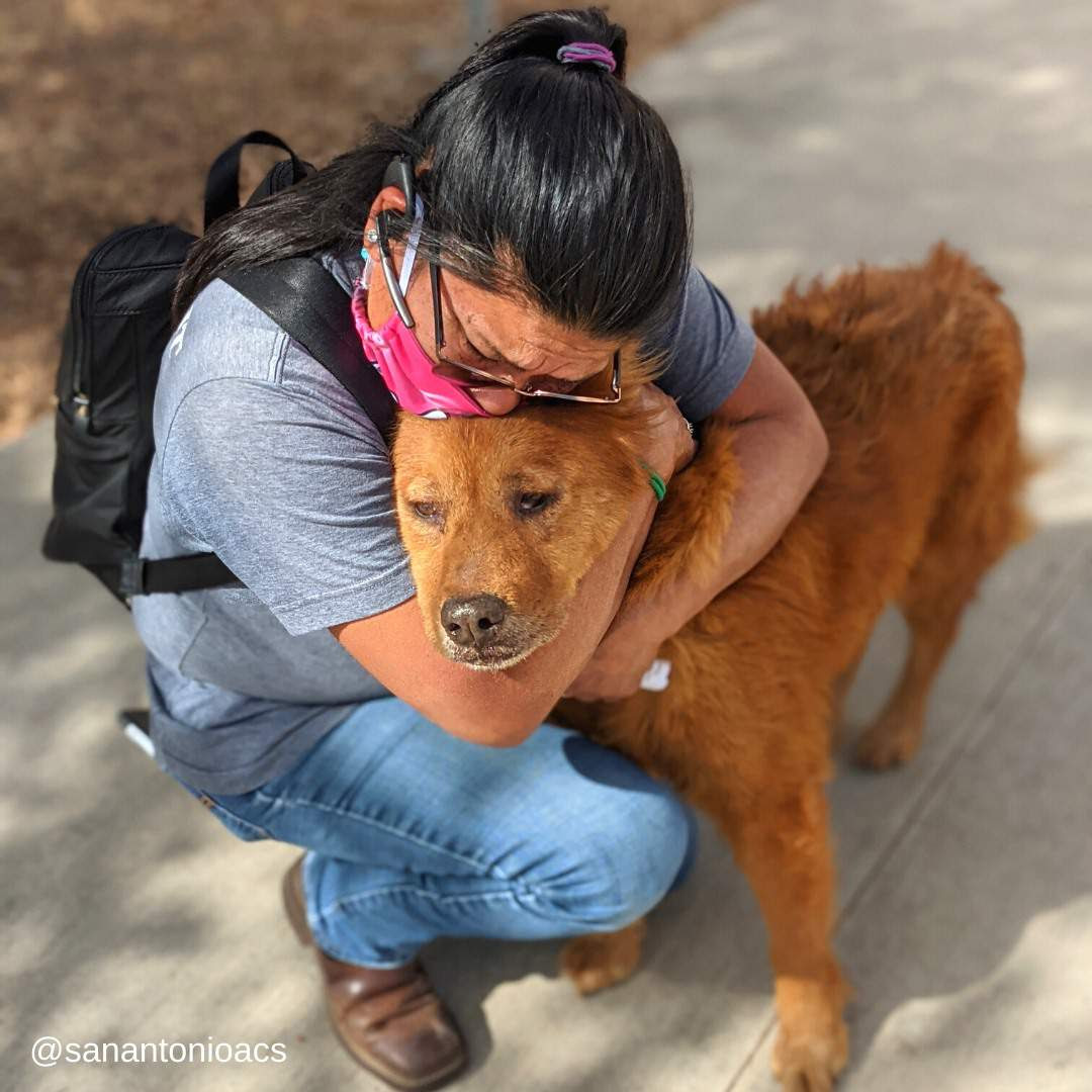 Honey and his owner reunited after 7 long years