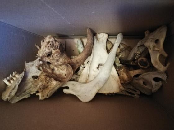 Box of Skulls