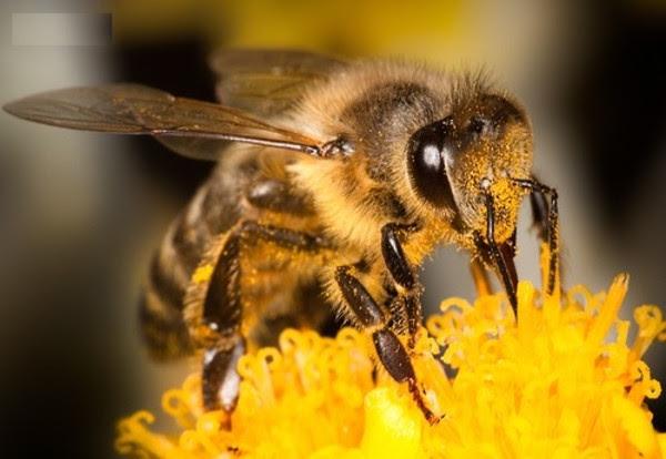 Theo một nhóm các nhà nghiên cứu thuộc đại học Queenlands, Úc ong có thể đếm tới 4