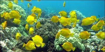 West Hawaii coral reef