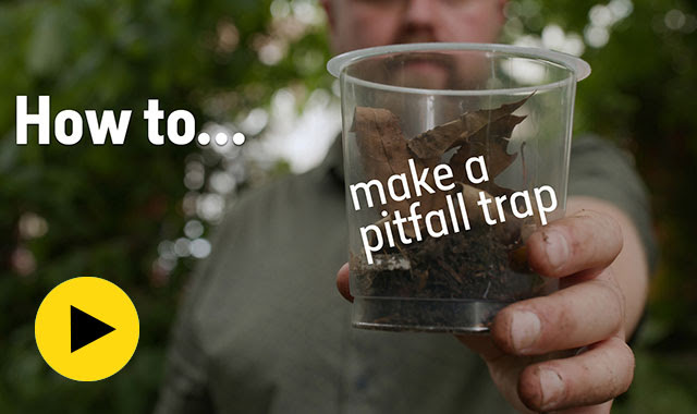 How to make a pitfall trap