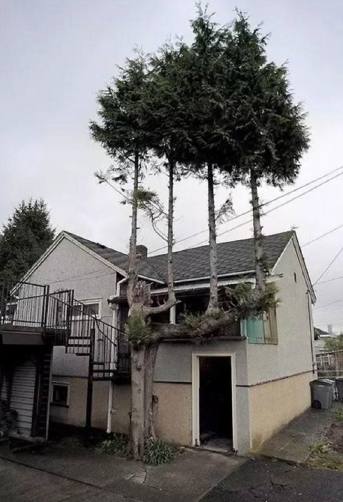 Четыре дерева из одного дерево, живучесть, жизнь, мир, планета, растительность, фото