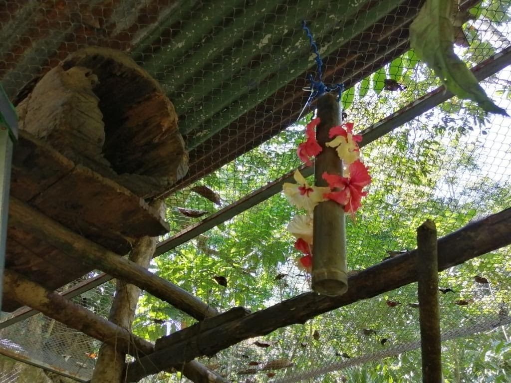 Hanging bamboo tube with hibiscus flowers around the sides