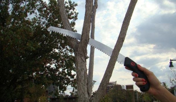 Image of an arborist sawing a branch from Bugwood.org