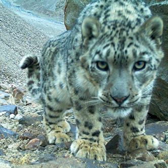 Critically Endangered Species Need Help
