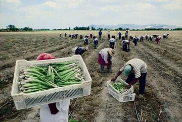 AGAP solicita no excluir al sector privado del grupo de trabajo sectorial para el desarrollo del sector agrario