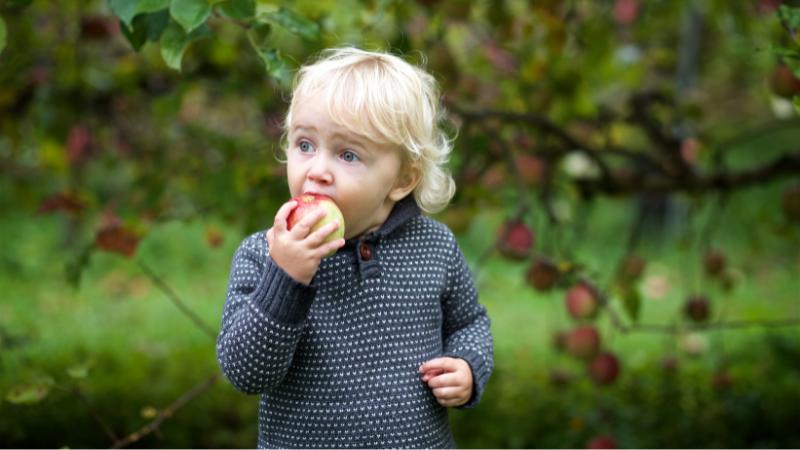 Apple Season is in Full Swing