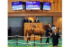 The Constitution colt consigned as Hip 559 in the ring at the Fasig-Tipton New York-Bred Sale