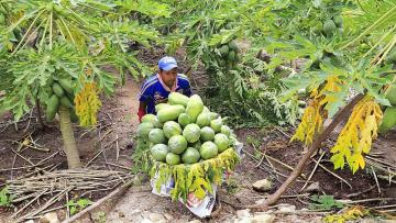 Frutas y verduras en Perú tienen un gran impacto en la generación de empleo y de divisas contribuyendo al desarrollo económico y sostenible
