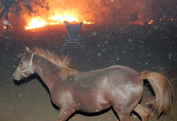 HOrse-and-fire