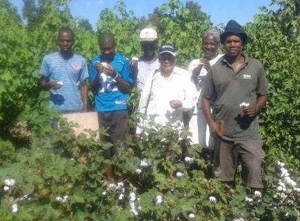 Haitian Cotton is a Farming Revolution in the Making