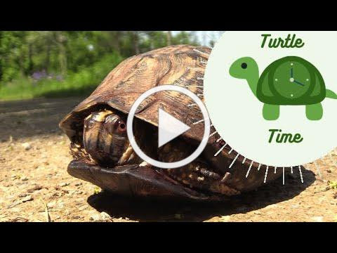 Turtle Time: The Shell