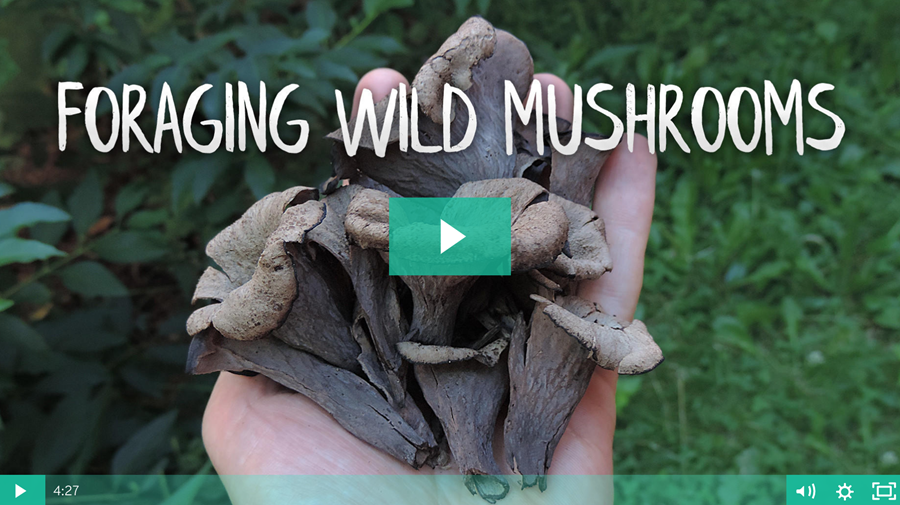 Foraging Wild Mushrooms — Online Course Registration Open For Limited Time