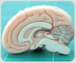 Researchers propose new approach to look deeper into brain function