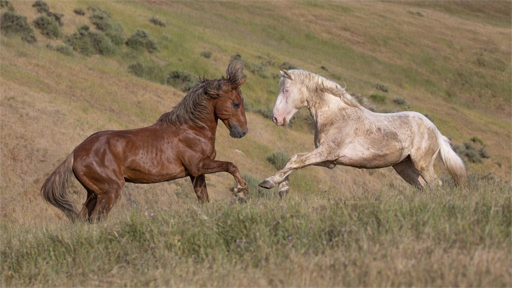Mustangs_16RTF_Deborah Kalas.jpg
