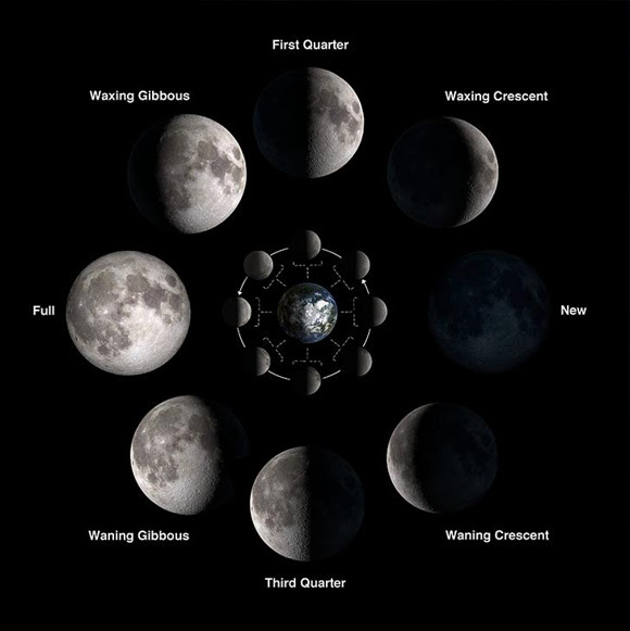 The last quarter moon is also called the third quarter moon. Contrast the illuminated sides of the first quarter and third quarter moons to see that the greater area of dark maria covers the third quarter moon. Image via NASA/Bill Dunford.