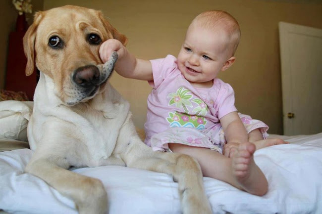 http://s.fishki.net/upload/post/201412/02/1339454/7172460-r3l8t8d-650-cute-big-dogs-and-babies-32.jpg