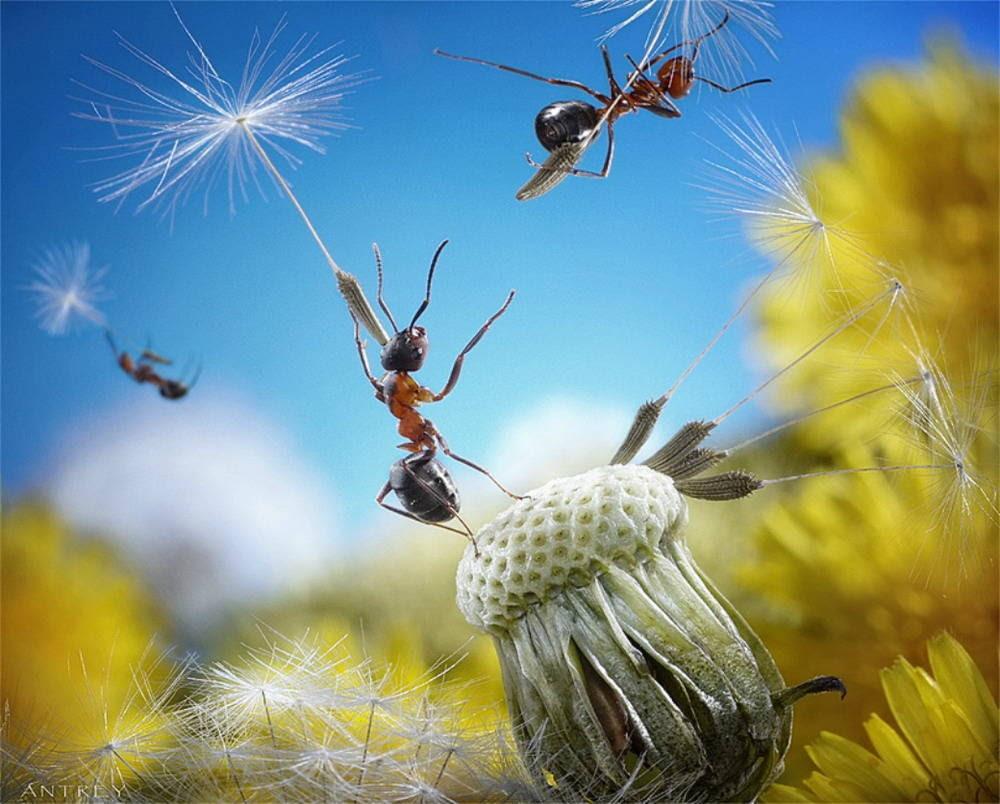 NHừng hình ảnh đẹp về loài kiến