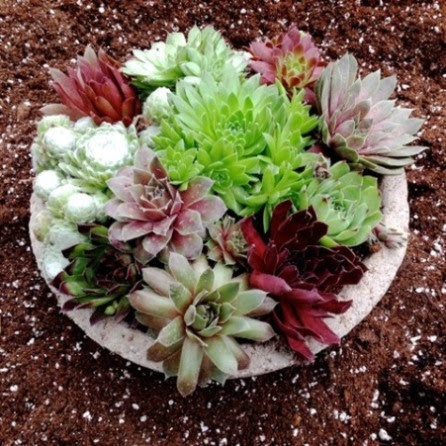 Hypertufa planting dish planted with succulents.