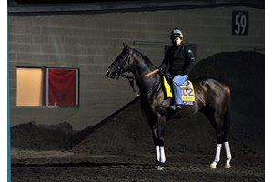 Higher Power is one of two grade 1 winners remaining in the Pegasus World Cup field