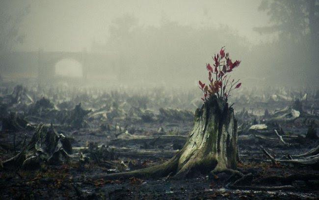 Sự sống duy nhất: vươn lên từ đống tro tàn