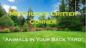 Mr. Chuck's Critter Corner
