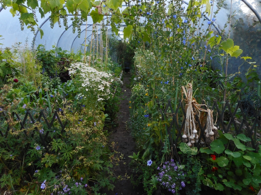 Midsummer abundance, photo taken early morning. So full of crops that Gerry Kelly and I only had time to talk about just a few on radio in From Tunnel to Table