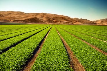 Crops grow on fertile farmland. Photo courtesy of iStock.