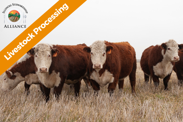 Livestock Processing is an Emerging Issue - Photo of cattle in the field