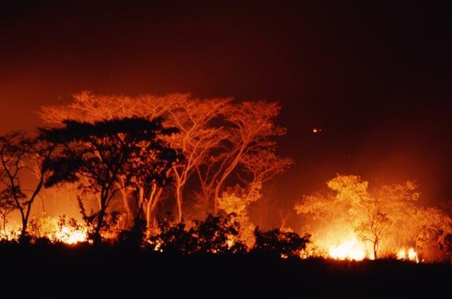 Incendio en un bosque.