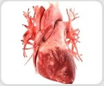 Experimental molecular therapy to block matrix-forming protein may prevent heart failure