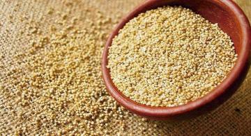 Más de la mitad de la quinua peruana de exportación sería orgánica, dentro de tres años