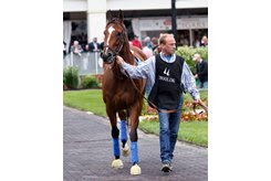 Grade 1-placed winner American Cleopatra is one of the horses the MGG investment firm is trying to reacquire to settle outstanding debts with Zayat Stables