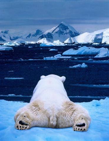 polar bear behind meme imgur