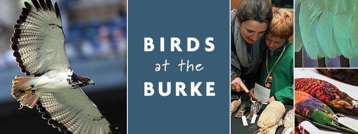 Birds at the Burke