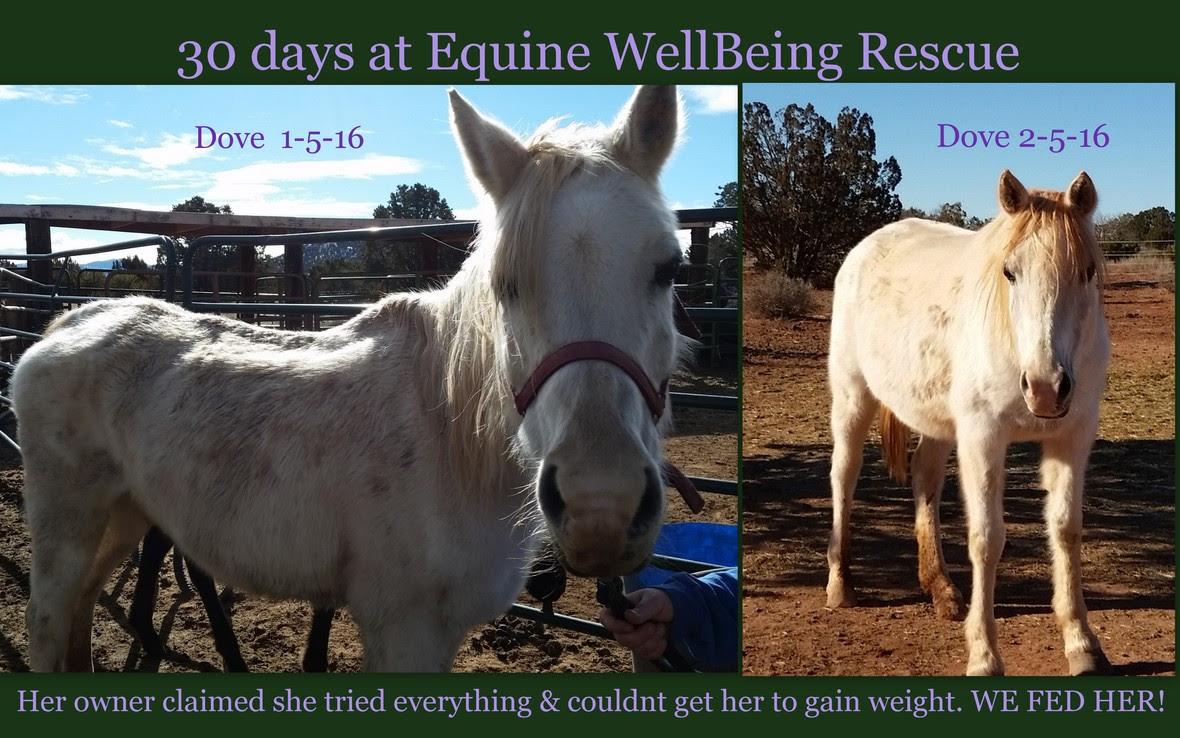 Julie Beadle Horses
