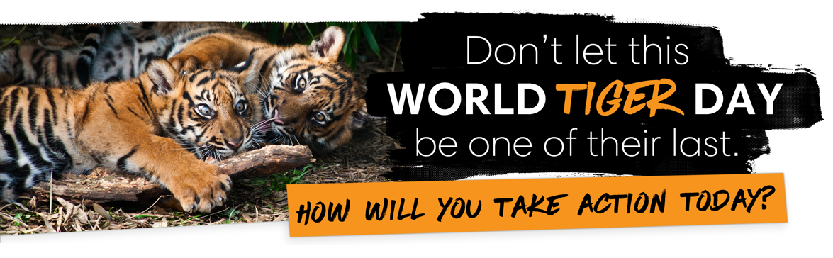 Sumatran tigers need your support on World Tiger Day