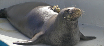 August Monk Seal