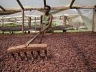 Cacao-Sao-Tome-FIDA-140x105.jpg