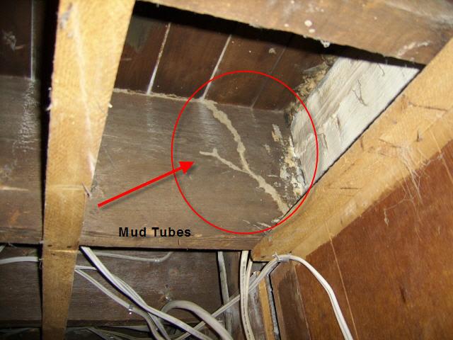 TermiteTubes